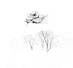 curley_stone + trees